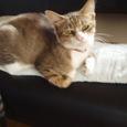 2007年子猫で捕獲したしおんちゃん