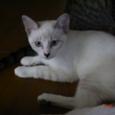 美猫とは私のこと?